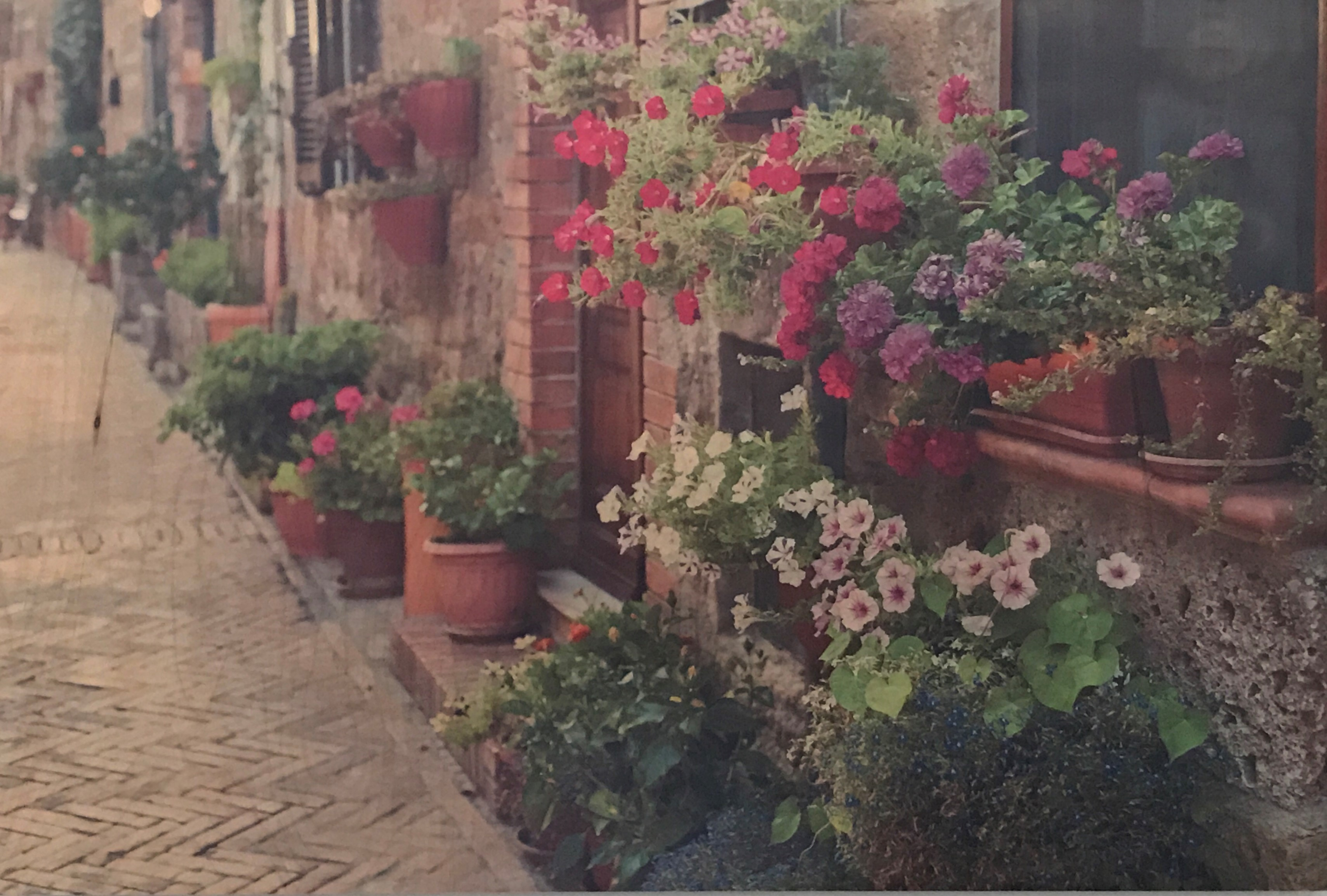 Amy Shuman, Flowers in Sovana, 2013, photograph on board