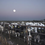 """Isabella La Rocca Gonzalez, Night of the Supermoon- Dairy Farm from the series CENSORED LANDSCAPES, Archival pigment print, 30"""" x 20"""" 2014"""
