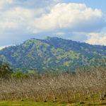 Alan Fishleder, Edgar Peak and Walnut Trees, https://www.instagram.com/afishleder/