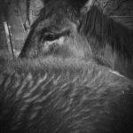 Patrick Cosgrove, Capay Horses, www.patrick-cosgrove.pixels.com