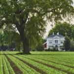 Alan Fishleder, Crop, Tree, House, https://www.instagram.com/afishleder/