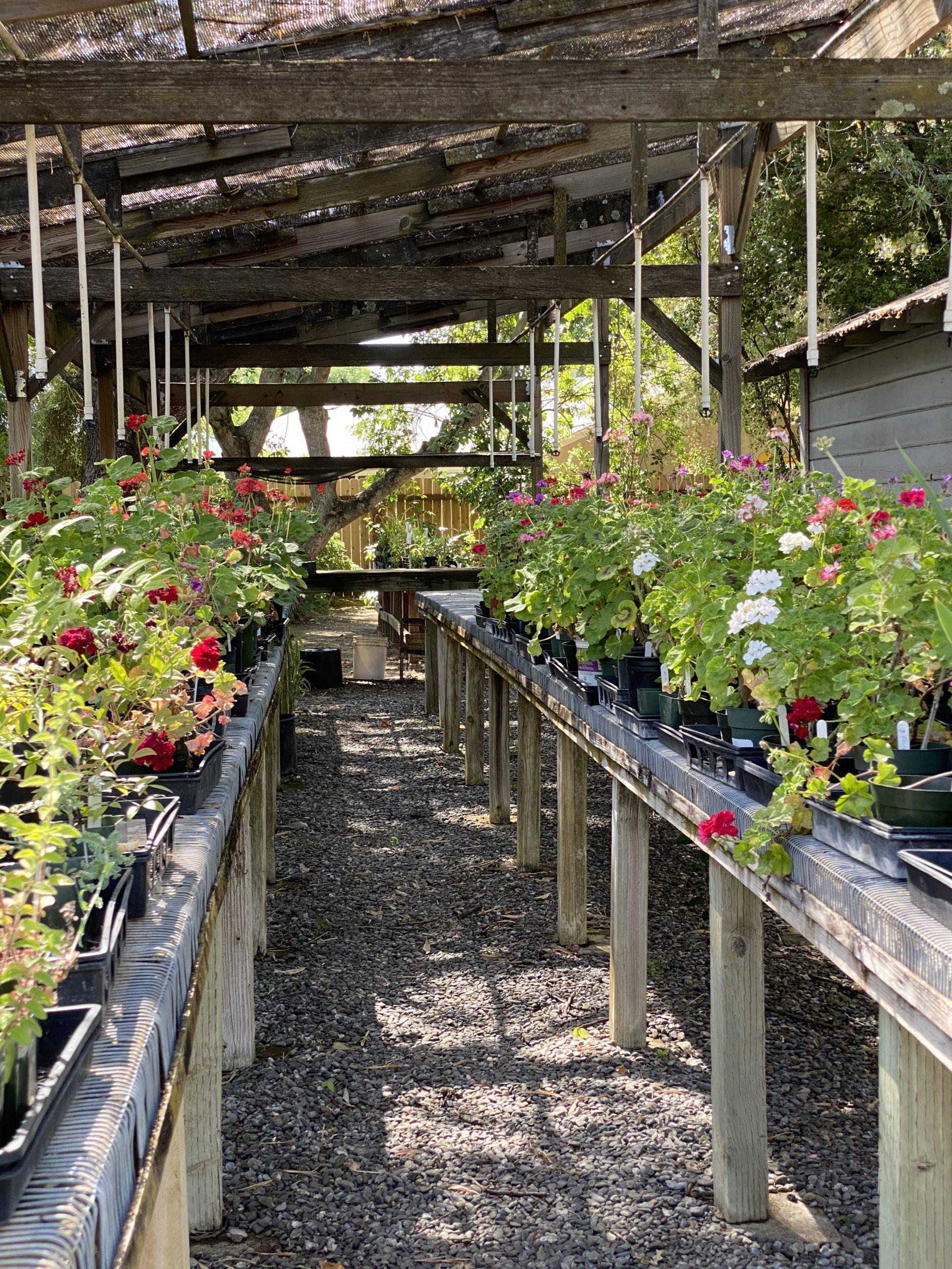 gibson garden 2