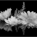 """Jan Lightfoot, Bouquet in B&W, Inkjet archival print, 16""""x20"""", $260"""