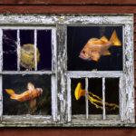 "Larry Coleman, Old Home Aquarium, Archival UltraChrome print, 16""x20"", $300"
