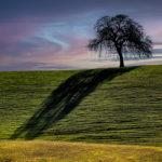 """Gabriel Unda, Lone Oak, Photograph, 16""""x20"""", $175"""