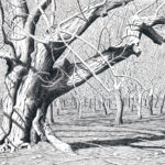 """Many Generations (Walnut orchard by Knights Landing), Pen and Ink on paper, 17"""" x 21"""""""